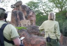 gli eroi del disney animal kingdom